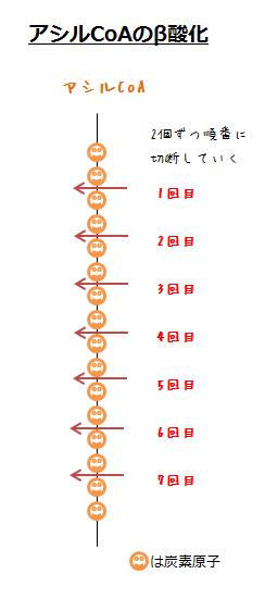 脂肪酸のβ酸化