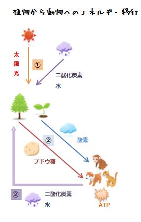 植物から動物へのエネルギー移行