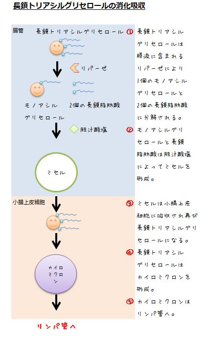 長鎖トリアシルグリセロールの消化吸収