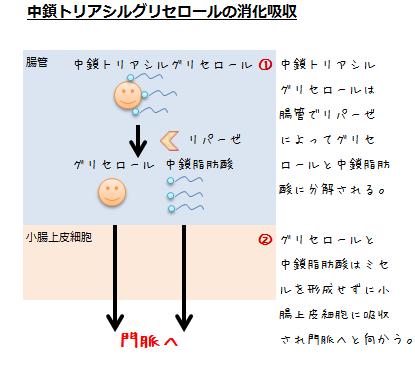 中鎖トリアシルグリセロールの消化吸収